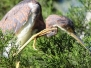 Birds, Bugs & Critters